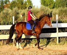 cavallonatura